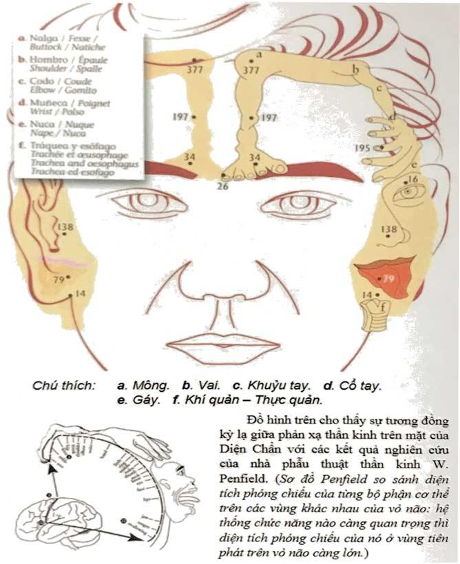 Reflexologie Dien Chan près du Raincy